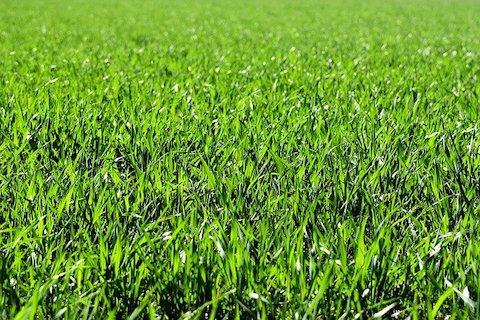 gras op spangen